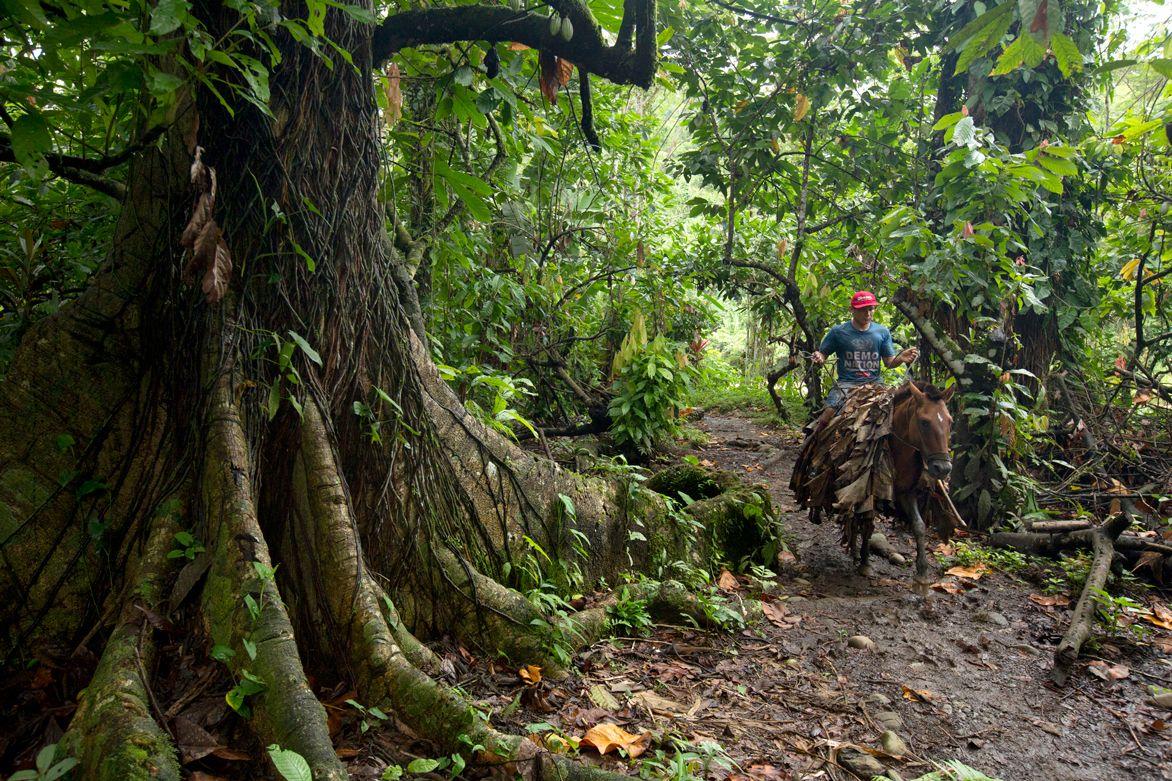 Κλιματική αλλαγή: Μεγάλη η καταστροφή των δασών το 2020